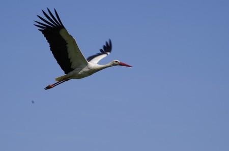 stork-829609_640