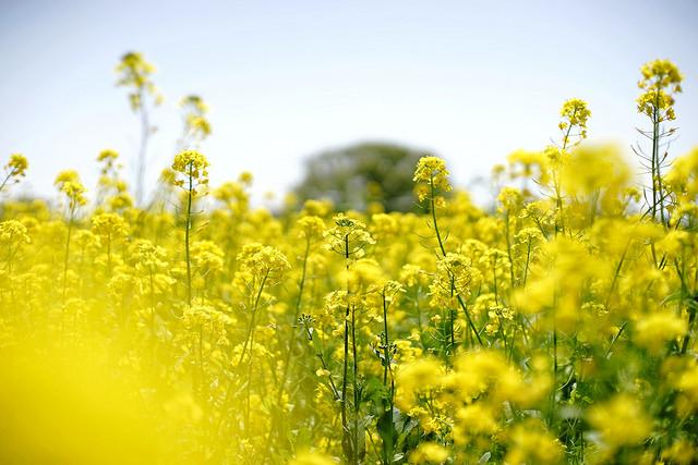 Kwiecień – miesiąc kwiatów, dębów, wiosny i złudnego ciepła