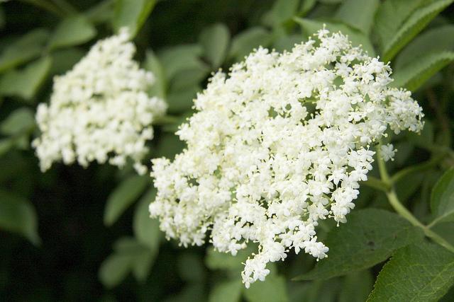 Maj – miesiąc kwitnienia