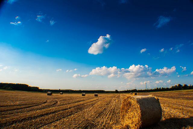 Sierpień – miesiąc sierpa i prac na polu